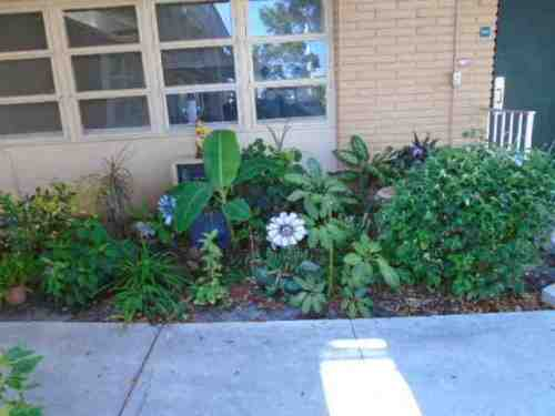 irenes-garden-newest.jpg