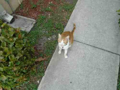 cat-july-27-2015.jpg