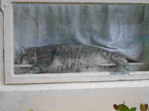 cat-1-oct-9-54yxcrv8s.jpg