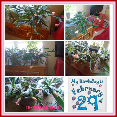 leap-year-christmas-easter-cactus-feb-2016-collage.jpg